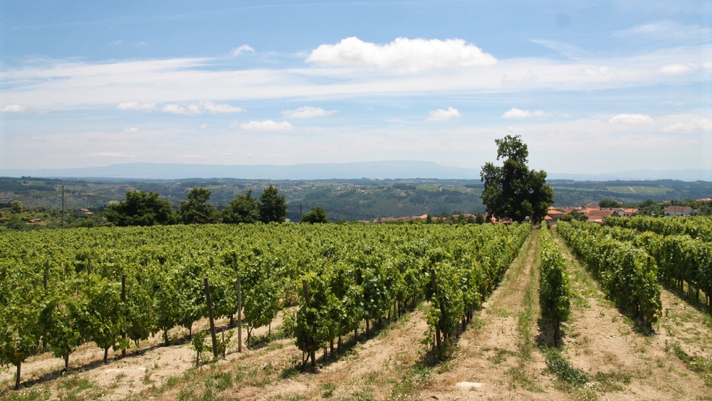 [다옹&코임브라]와인과 대학의 조합? 포르투갈에서는 이 조합이 가능하다!