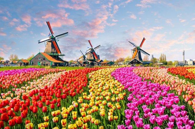동화같은 네덜란드의 풍경! 풍차마을 잔세스칸스 & 암스테르담 시티투어