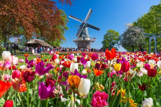 꽃축제 Keukenhof - 3월 21일부터 5월 19일까지 단독 차량 투어