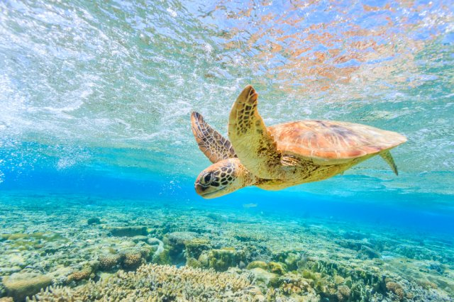 자킨토스 거북이섬 투어(바다거북-스노쿨링)
