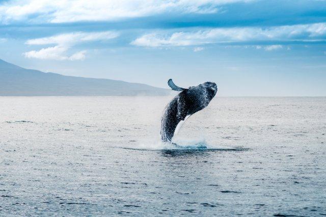 [달빅]우리 배타고 혹등고래 보러 갈까요? 바다낚시도 같이해요!