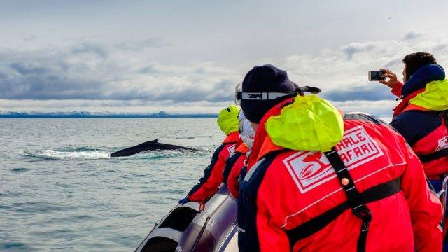 [4월오픈]거대한 고래를 지금 바로, 눈 앞에서! 레이캬비크 익스프레스 고래투어