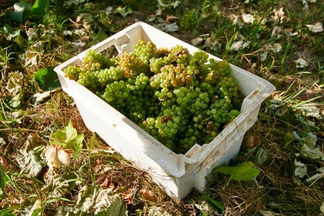 [포르투북부] 비아나&몬세오 와인컬쳐 투어