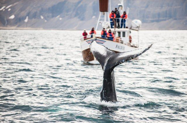 고래&돌고래 IN 레이캬비크 - 바다 친구들 만나러 출~발~!