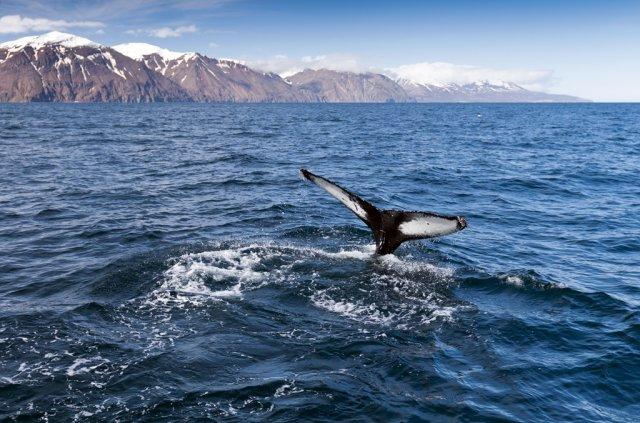 아이슬란드 레이캬비크 고래투어