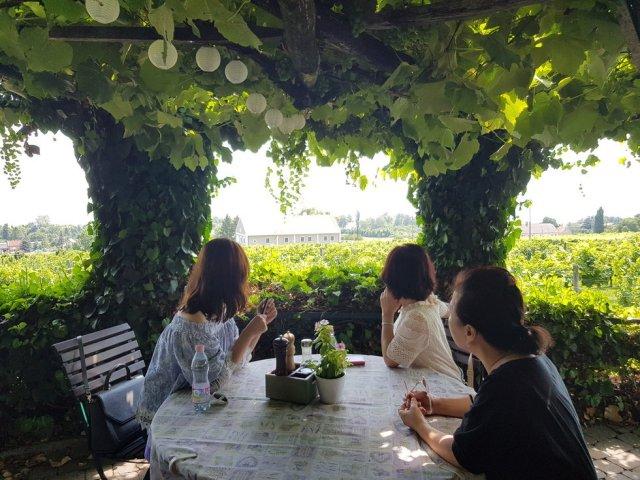 [와이너리 낭만투어] 헝가리 최고 와인산지가 있는 벌러톤 와인트립:배틀트립 코스