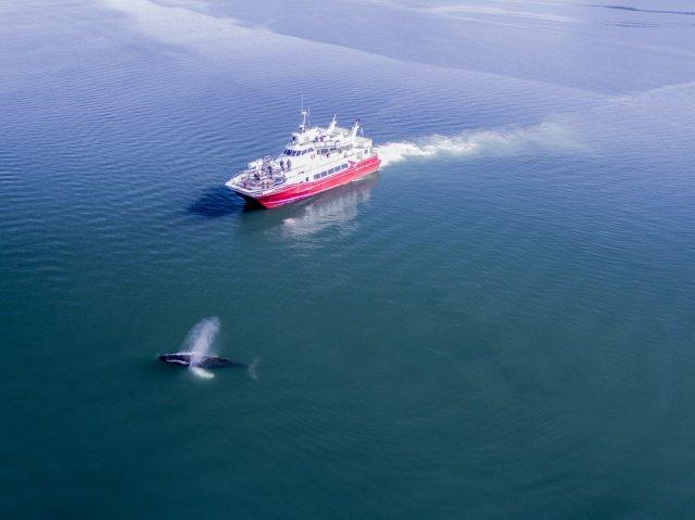 고래가 다니는 길을 따라가보자, 아퀴레이리 클래식 고래투어!